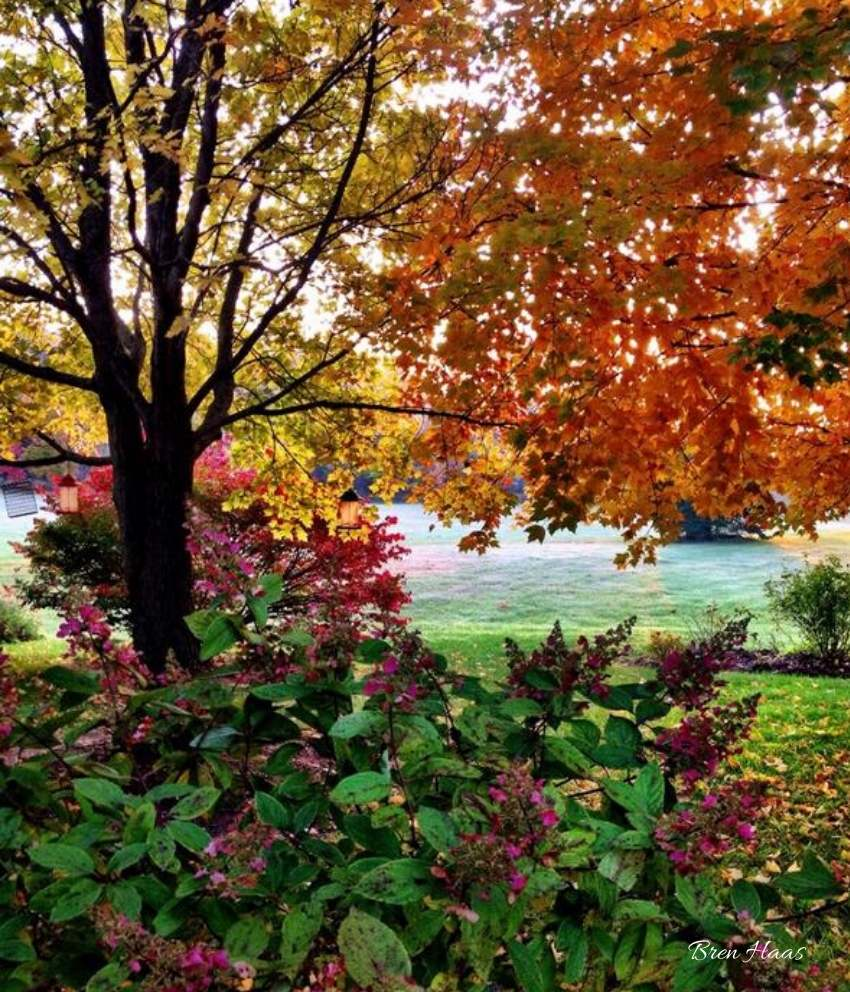 Autumn Pinky WInky Landscape