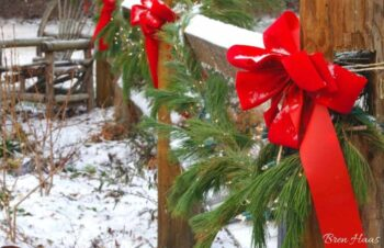 red bows in the landscape