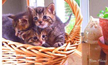 kitties make me smile