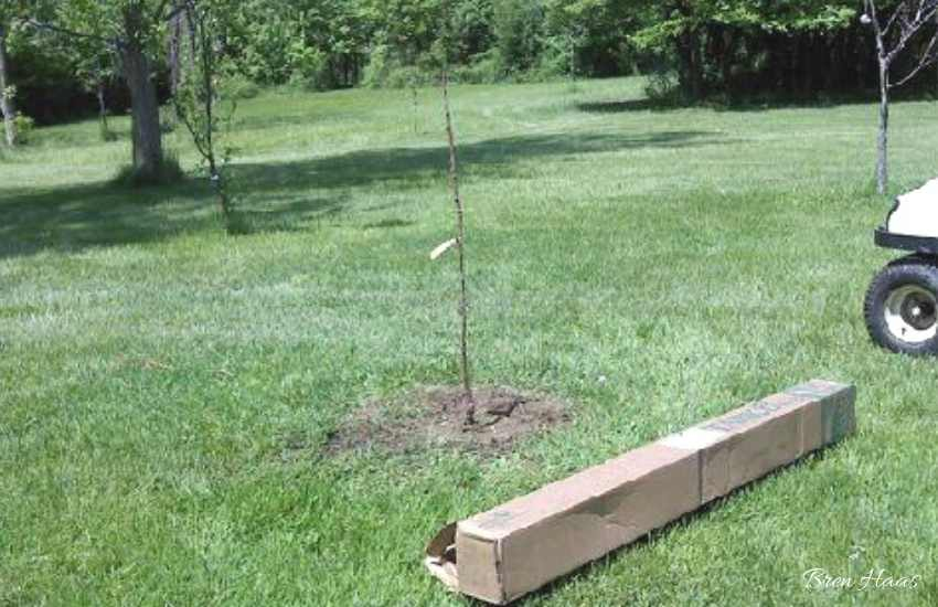 Fruit Tree Arrives In Box