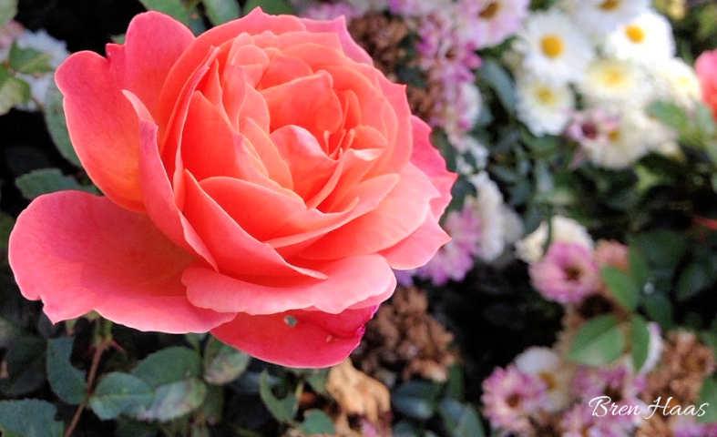 Loretta Lynn Rose