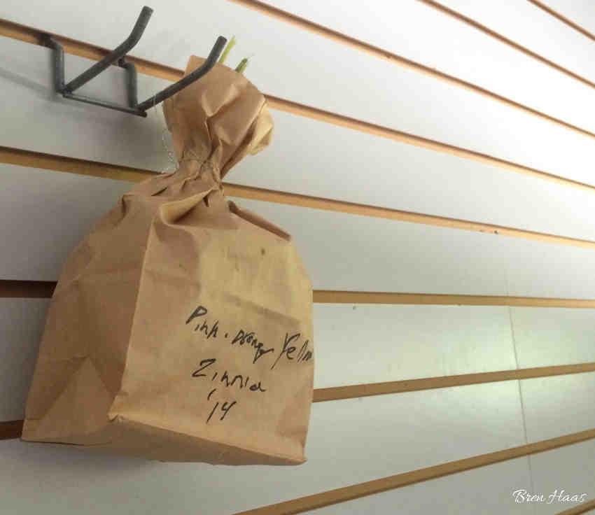 Hanging Bag of Zinnias to Dry