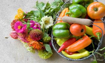 Saving Zinnia Seeds