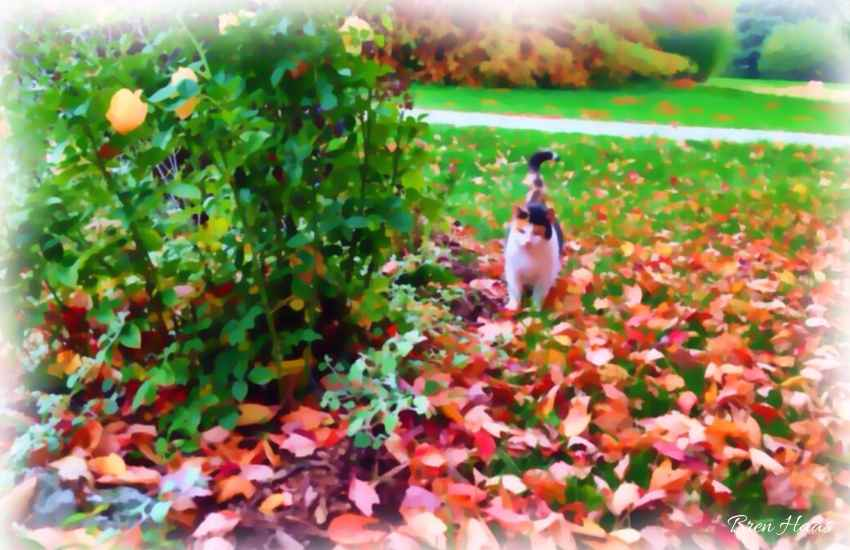 Betty Kitty in the Leaves