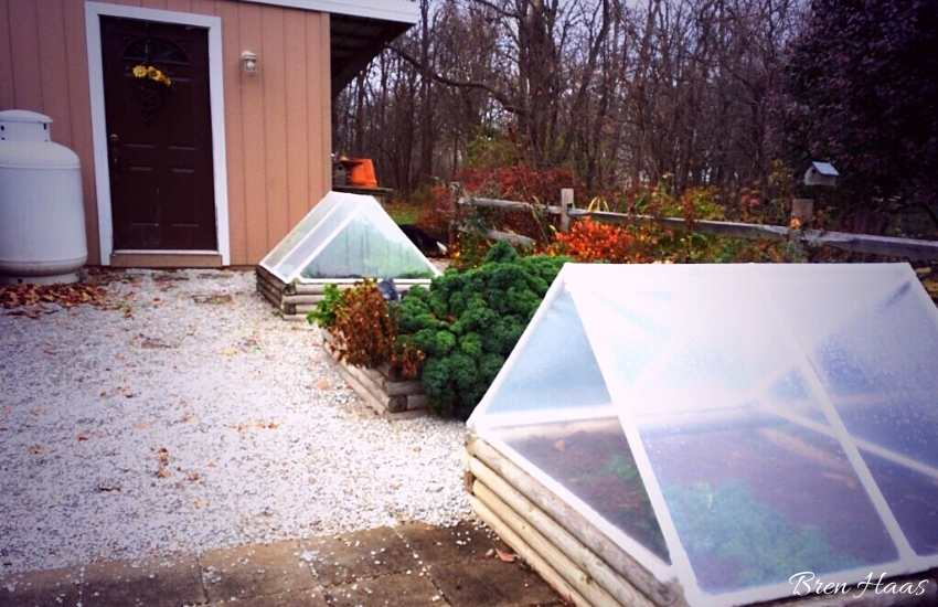 new cold frames my husband built