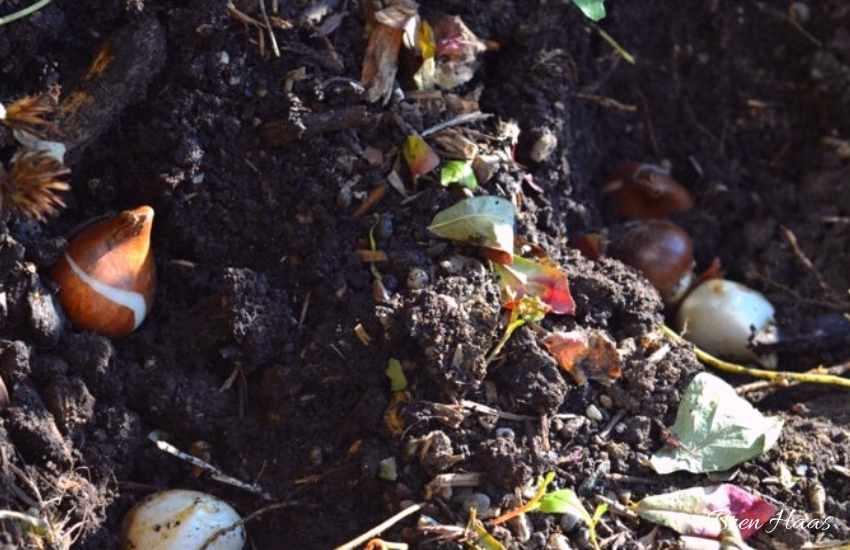 planting in autumn