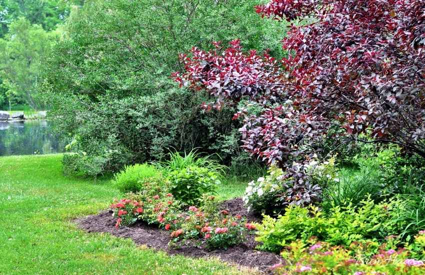 new plants in my landscape by the pond 2014