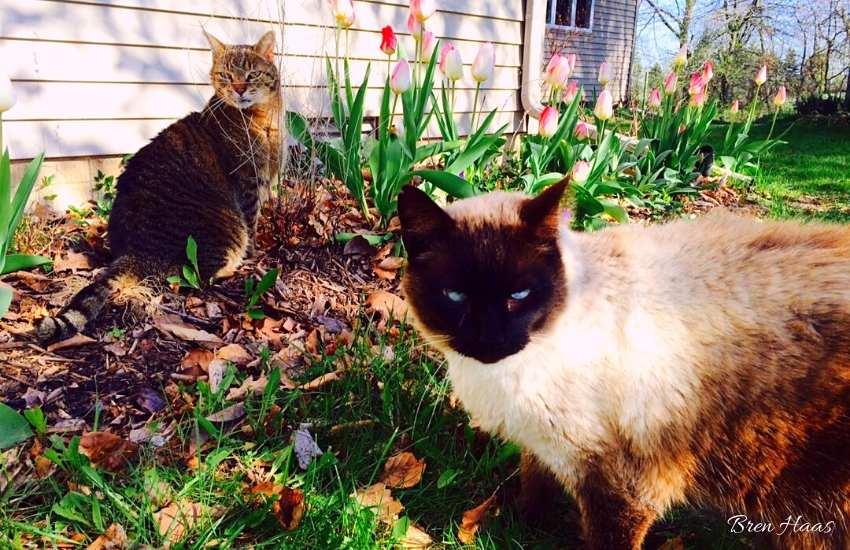 Spring Fur Babies