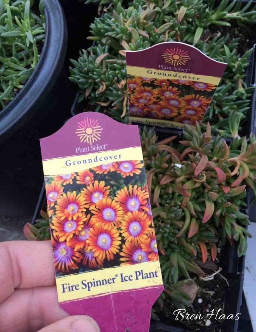 ice plant at Andersons