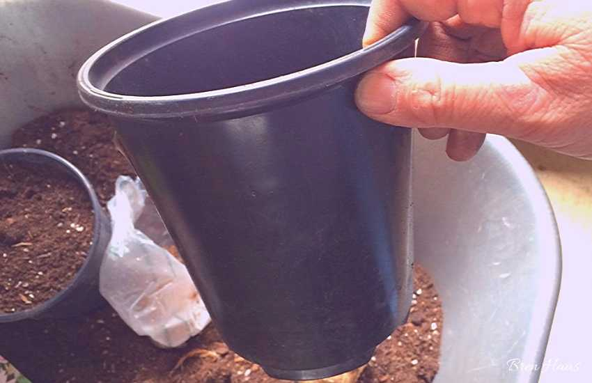 Recycle Containers for Dahlia Tubers