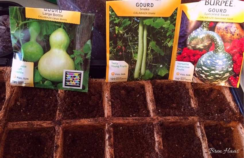 gourds starting seeds