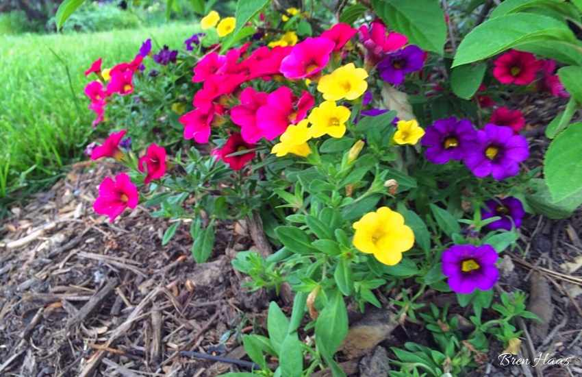 tucking color in the home garden