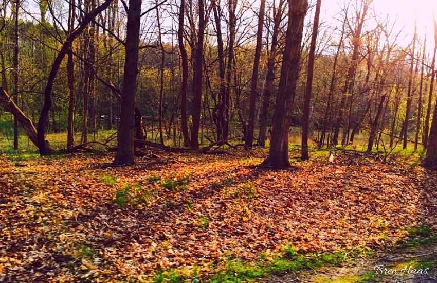 oak openings Park