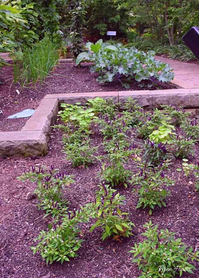 vegetables in landscape