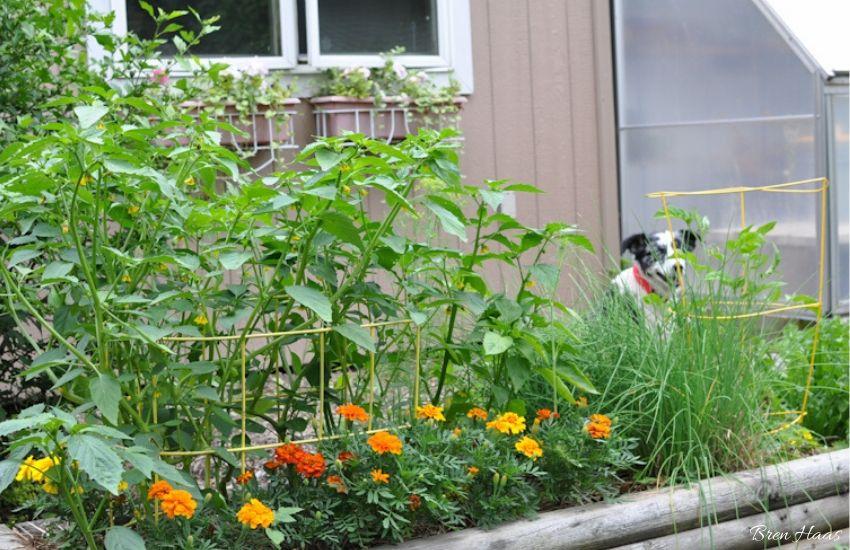 olivia watching the garden grow
