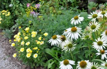 Landscape Along Greenhouse
