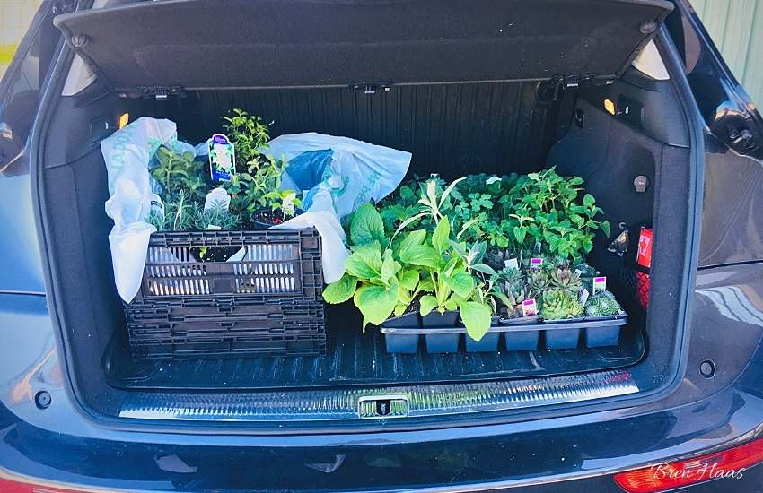 Audi loaded with plants