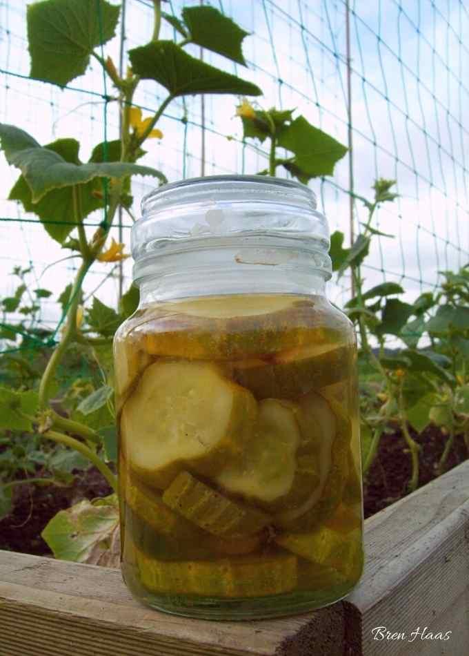 Gherkin Relish Recipe
