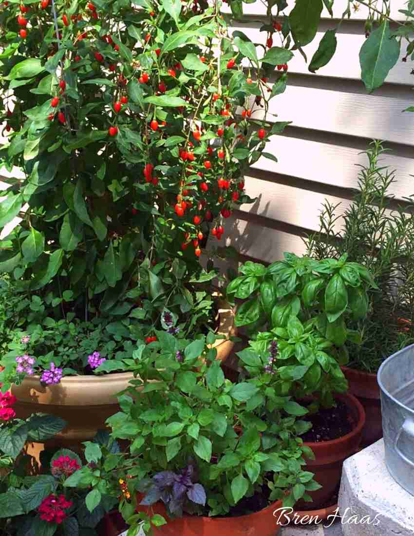 Container Gardening on Step
