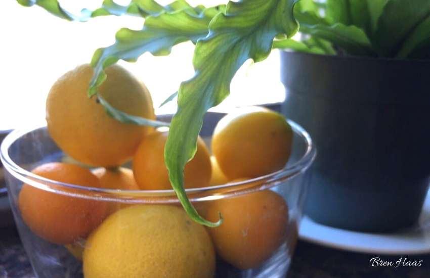 fresh lemons from home garden