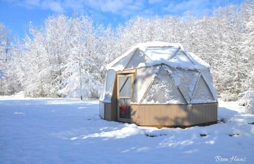 dome garden in winter woods