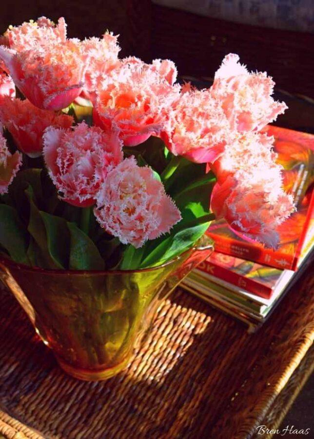 tulips indoors