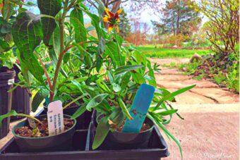 New Darwin Perennial Plants for 2019