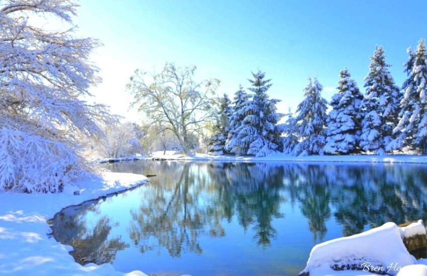 winter wonderland pond and trees