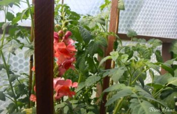flowers and tomatoes growing in the June dome