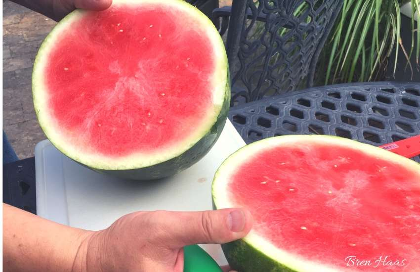 Watermelon on 4th of July
