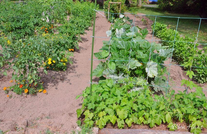 home garden of bren haas in summer 2009