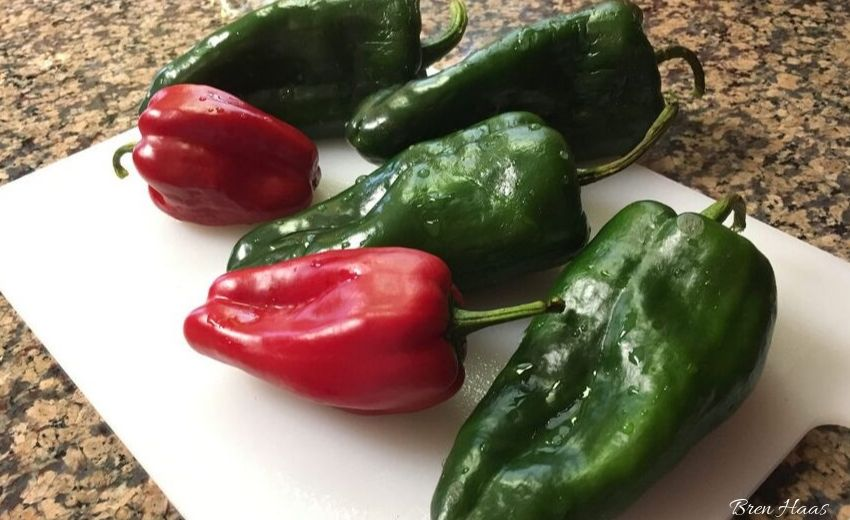 sweet peppers with poblano