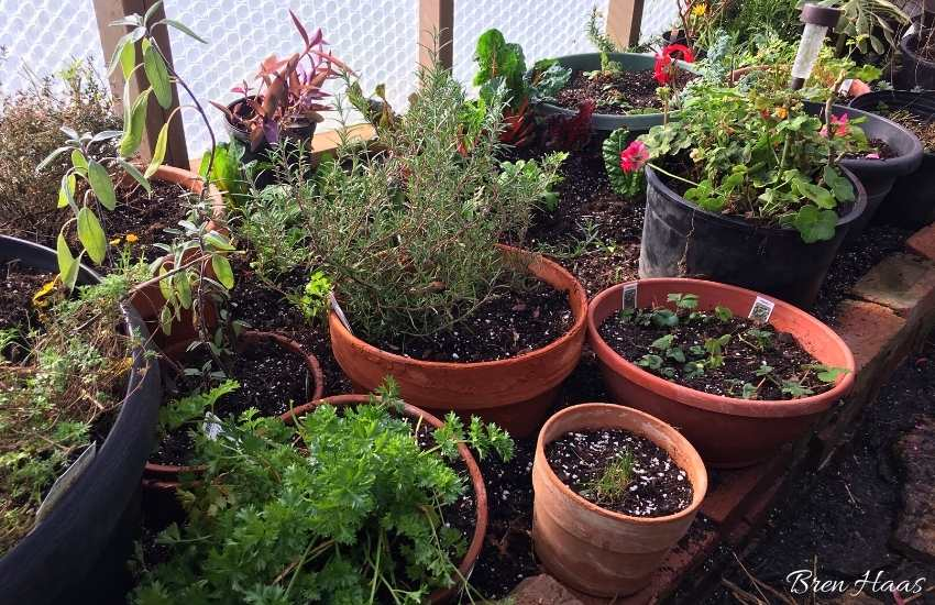 winter gardening in the dome