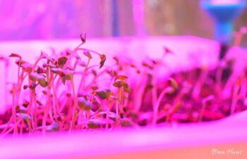 growing under lights in altifarm