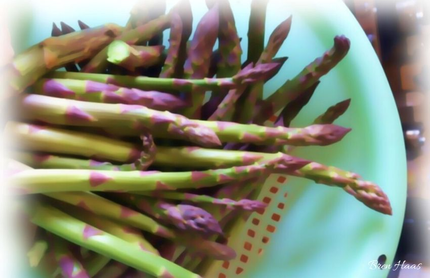 asparagus fresh in blue bowl