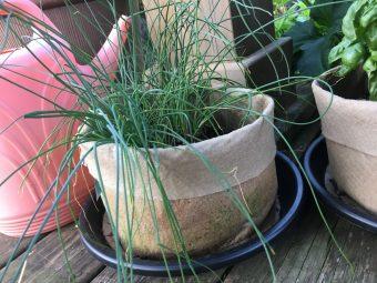 Summer Fresh Herbs and Vegetable Rotini Salad Recipe