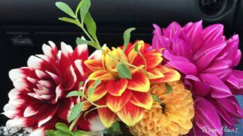 cut flowers from Brens' Garden