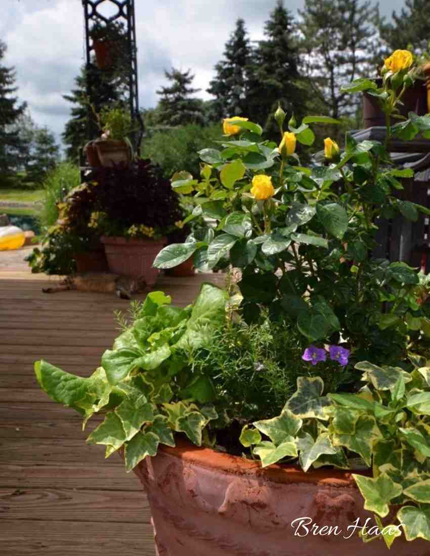 Encourage Blooms in Containers
