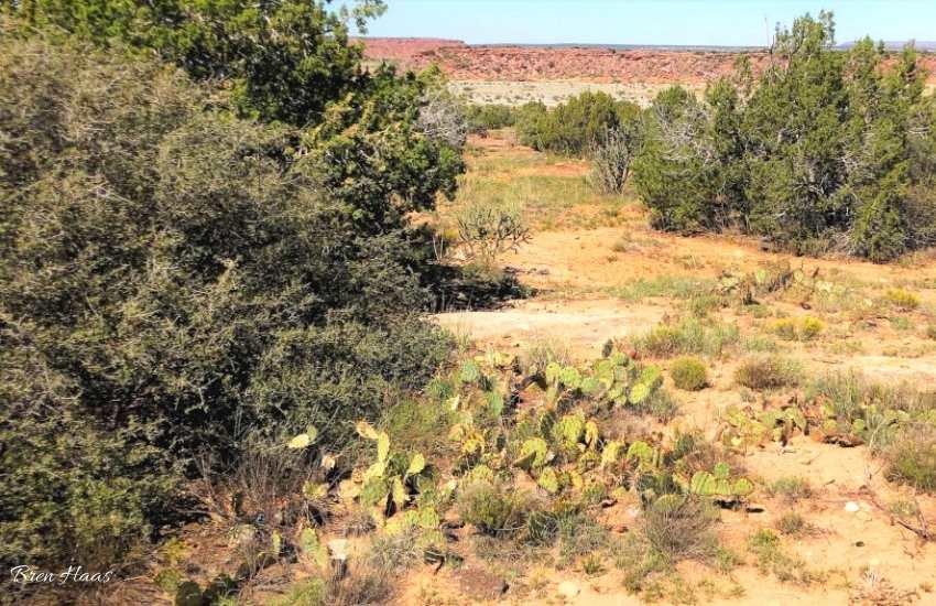 New Mexico Cactus Wild