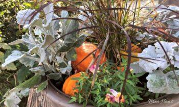 grass and pumpkins
