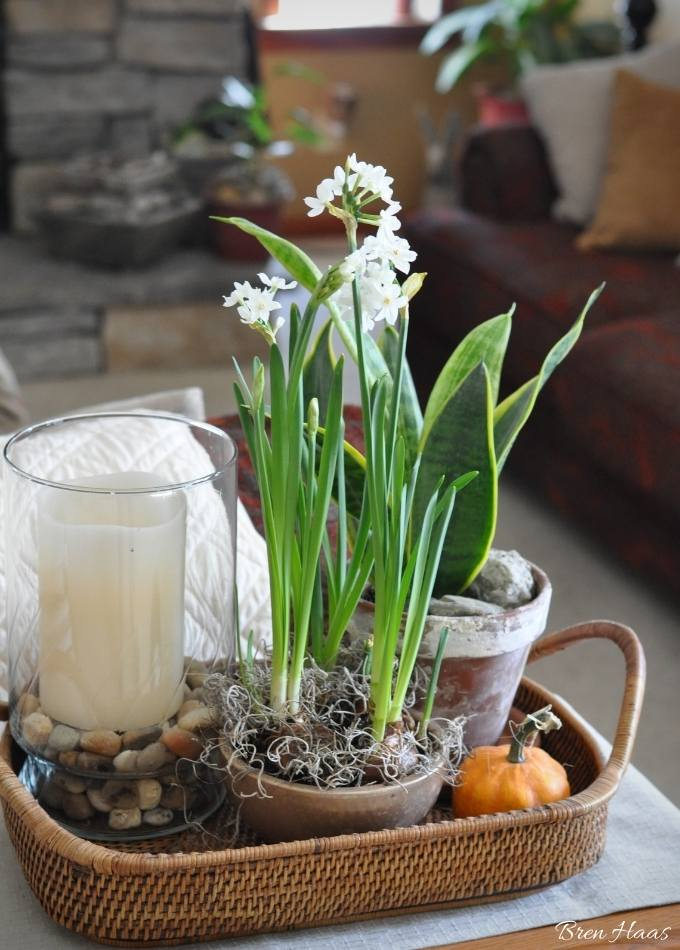 living room decor with forced bulbs