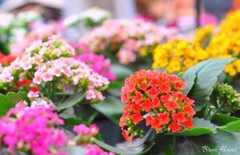 Garden Center Visit - Indoor Plants