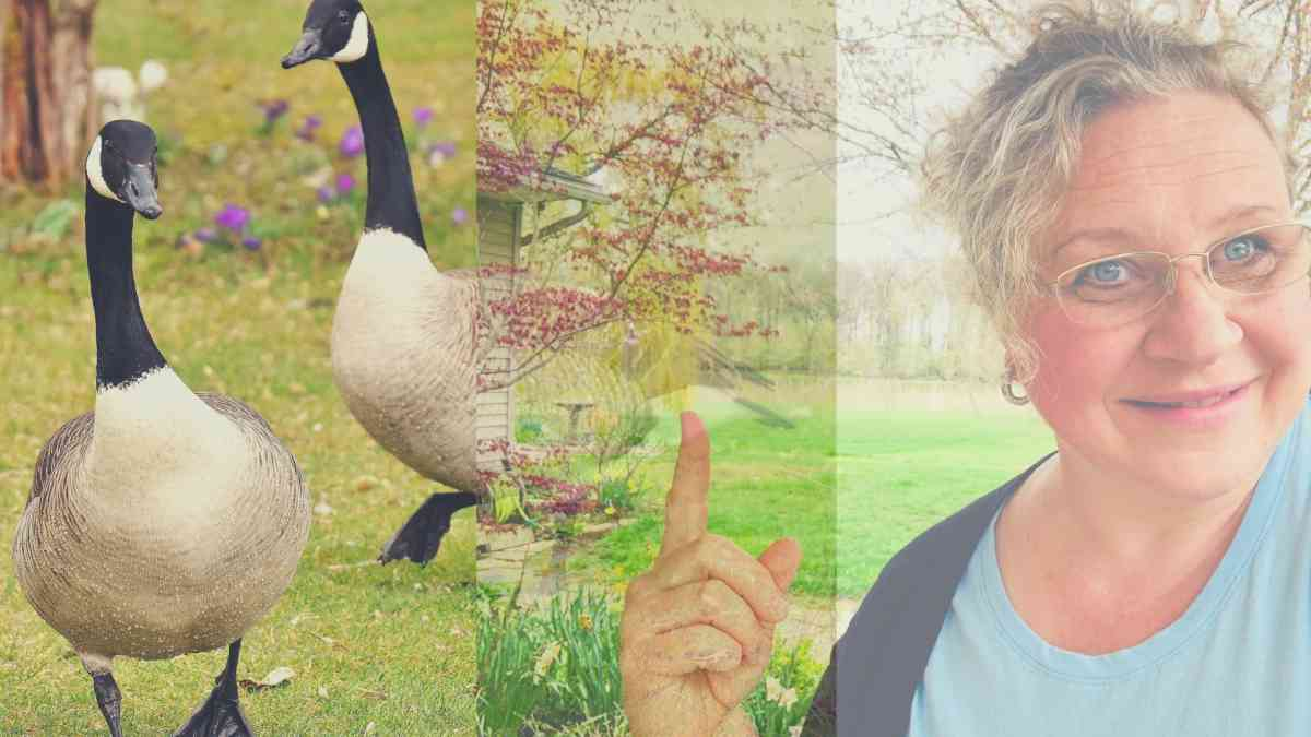Bren Haas and Geese