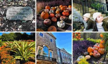 Autumn at Cheekwood College