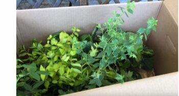 Opening Box with New Star Plants