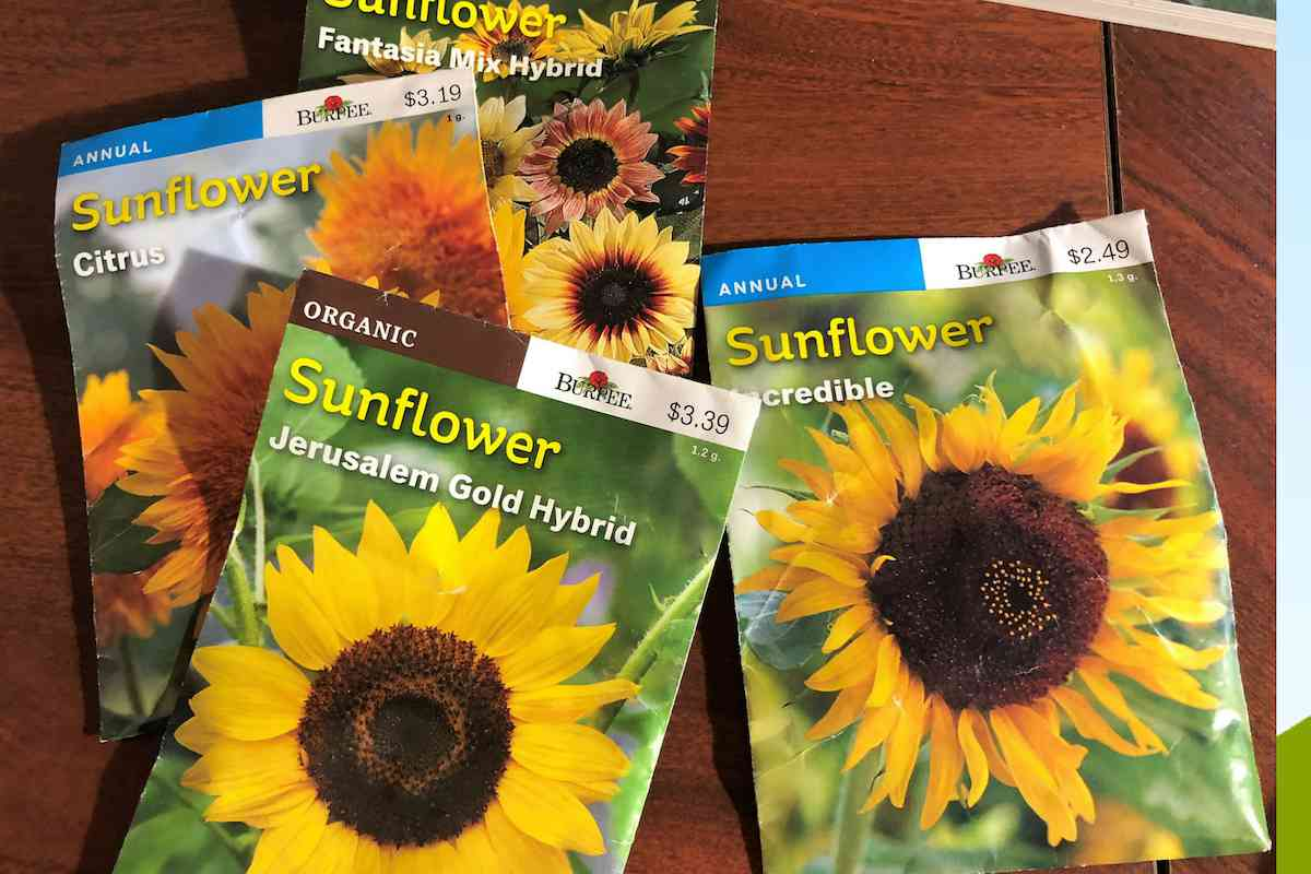 new seeds for my garden