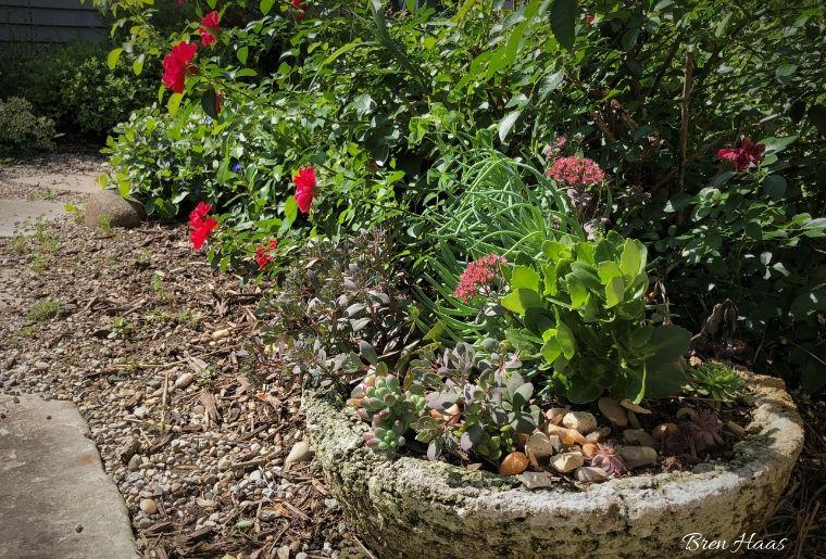 mini garden with transplants in sun landscape