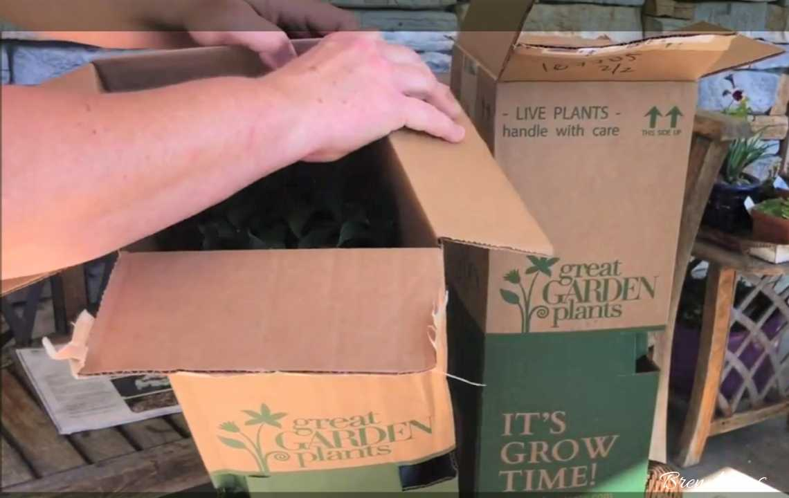Unboxing New Plants From Proven Winners ColorChoice