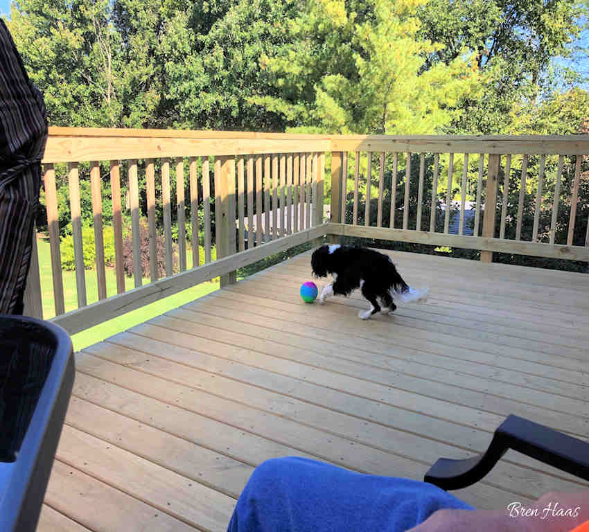 Puppy playing on Balcony