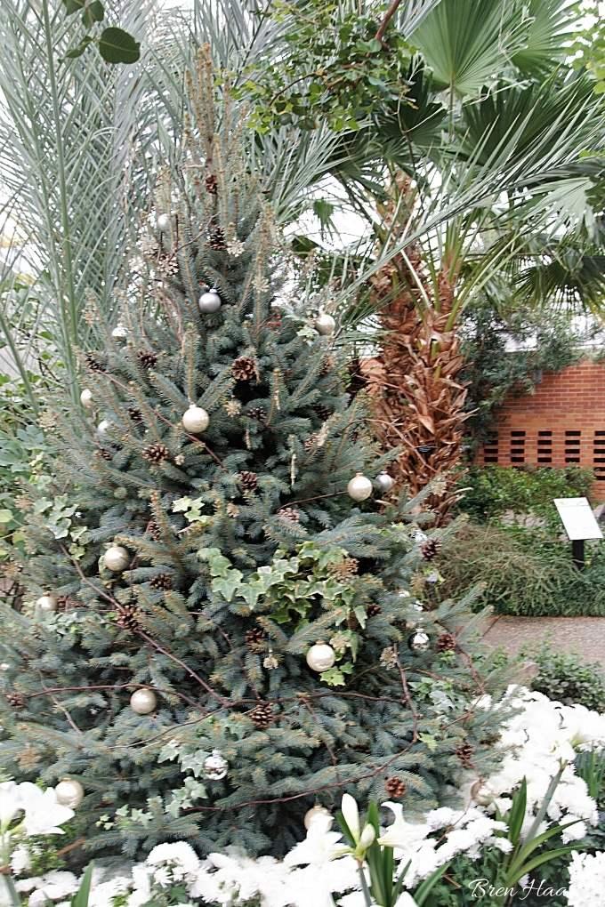 cheerful tree at Matthaei Botanical